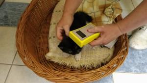 余談だけど、猫の首には個体識別のためのチップが埋め込まれていてこうやって機械で読み取れる。