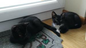 黒猫ってホントに写真貼得しないね…。